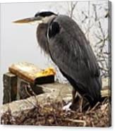 Great Blue Heron Wildlife Bird Canvas Print