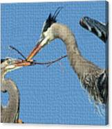 Great Blue Herons Build A Nest Canvas Print