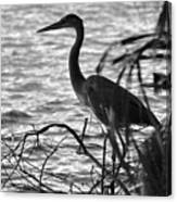 Great Blue In Black And White Canvas Print