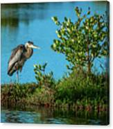 Great Blue On One Leg Canvas Print