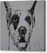Great Dane  Canvas Print