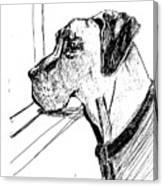Great Dane Waiting Canvas Print