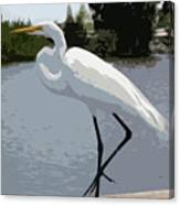 Great Egret    Ardea Alba Canvas Print