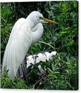 Great Egret 17 Canvas Print