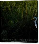 Great Egret At Ft George Inlet  Canvas Print