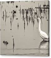 Great Egret At Horicon - B - W  Canvas Print
