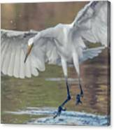 Great Egret Chase 072316-9861-2cr Canvas Print