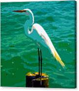 Great Egret Emerald Sea Canvas Print