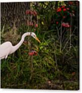 Great Egret In The Garden Canvas Print