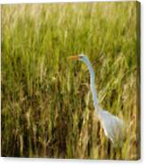 Great Egret In The Morning Dew Canvas Print