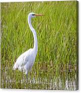 Great Egret In The Spring  Canvas Print