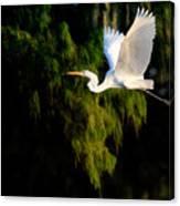 Great Egret Canvas Print