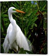 Great Egret Nesting Canvas Print