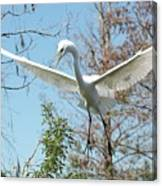 Great Egret Over The Treetops Canvas Print