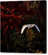 Great Egret Paradise Flight Canvas Print