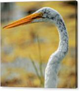 Great Egret Profile Canvas Print