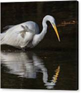 Great Egret Staring At His Reflection Canvas Print