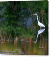 Great Egret Summer Pond Canvas Print