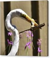 Great Egret With Lizard Who Is Holding Onto Wood Canvas Print