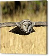 Great Gray Owl In Flight Canvas Print