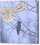 Great Gray Owl Together Canvas Print