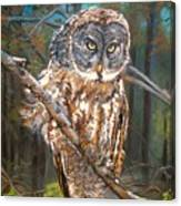 Great Grey Owl 2 Canvas Print
