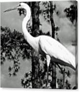 Great Heron Canvas Print