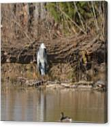 Great Heron Turtles And Grebe Duck  Canvas Print