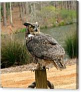 Great Horned Owl 1 Canvas Print