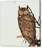 Great Horned Owl At Dusk Canvas Print