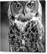 Great Horned Owl Bw IIi Canvas Print