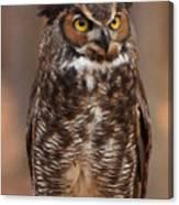 Great Horned Owl Digital Oil Canvas Print