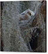 Great Horned Owl Fledgling Canvas Print