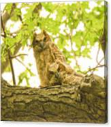 Great Horned Owl Fledglings Canvas Print