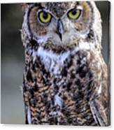 Great Horned Owl IIi Canvas Print
