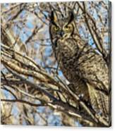 Great Horned Owl In Cottonwood Tree Canvas Print