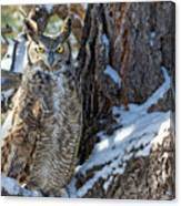 Great Horned Owl On Snowy Branch Canvas Print
