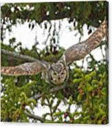 Great Horned Owl Takeoff Canvas Print