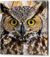 Great Horned Stare Canvas Print