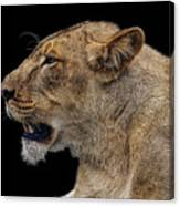 Great Lioness Canvas Print