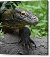 Great Look At A Komodo Dragon With Long Claws Canvas Print