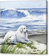 Great Pyrenees At The Beach Canvas Print