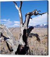 Great Sand Dunes National Park Fallen Tree Portrait Canvas Print
