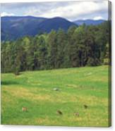 Great Smoky Mountains Deer Grazing In Field Canvas Print