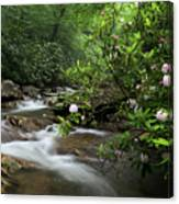 Great Smoky Mountains Rosebay Rhododendron Canvas Print