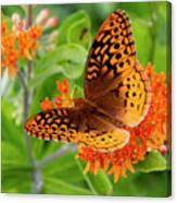 Great Spangled Fritillary I Canvas Print