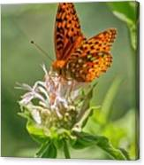Great Spangled Fritillary On Bee Balm Canvas Print