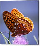 Great Spangled Fritillary Canvas Print