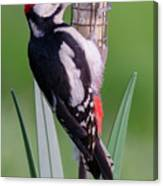 Great Spotted Woodpecker 1  Canvas Print