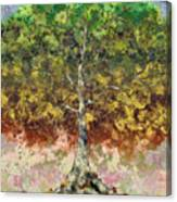 Great Sycamore Canvas Print